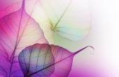 Пурпурные листы