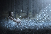 Бабочки в лесу