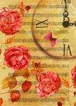 Время роз