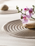 Орхидея на песке