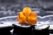 Орхидея на черном камне