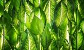 Зеленое царство