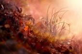 Расвет и роса