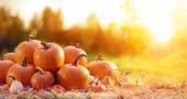 Оранжевый урожай