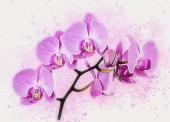 Живопись. Акварельная орхидея