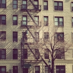 Город. Нью-Йорк дерево у дома
