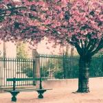 Город. Нью-Йорк Лавочка под волшебным деревом