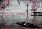 Природа. Озеро с розовыми деревьями