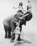 Девушки со слоном