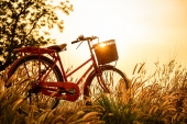 Природа. Велосипед на закате