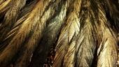 Природа. Золотые перья