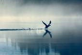 Природа. Птица над озером