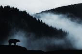 Природа. Силуэт медведя на фоне гор