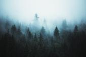 Природа. Таинственный лес в тумане