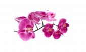 Капли на лепестках орхидеи