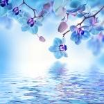 Голубые орхидеи над водой