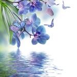 Пурпурные орхидеи