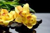 Желтые орхидеи в воде
