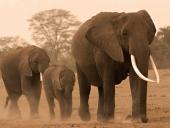 3 слона