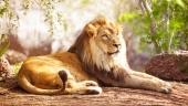 Лежащий лев