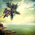 Пальма на скале