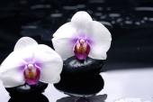 Белые орхидеи в воде