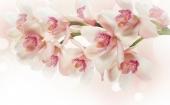 Орхидеи на ветке