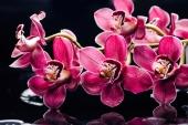 Орхидеи глянец
