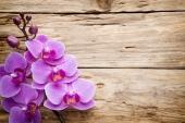 Орхидеи на дереве