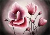 Розовые маки на сером фоне