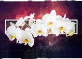 Орхидеи на бордовом фоне