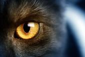Глаз пантеры