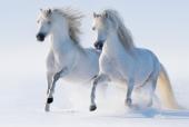 Белая двойка