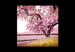 модульная картина Природа. Цветущее дерево