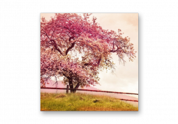 модульная картина Природа. Цветущее Розовое дерево