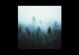 модульная картина Природа. Таинственный лес в тумане