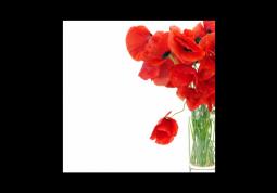 модульная картина Маки на белом фоне