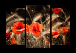 модульная картина Маки и пшеница