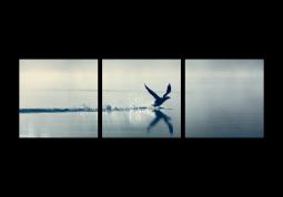 модульная картина Природа. Птица над озером