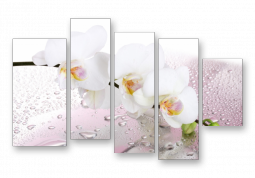 модульная картина Орхидея в каплях воды