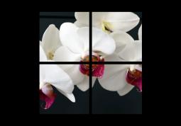 модульная картина Орхидеи на черном фоне