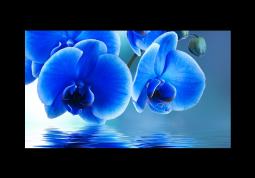 модульная картина Голубая орхидея над водой