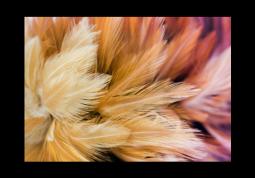 модульная картина Природа. Нежные перья