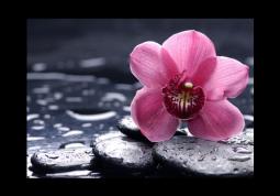модульная картина Чайная орхидея в воде