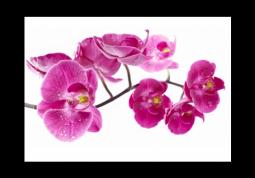 модульная картина Капли на лепестках орхидеи