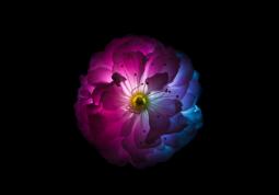 модульная картина Свет сквозь цветок