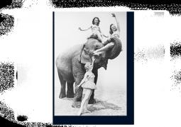 модульная картина Девушки со слоном